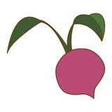 Значок овоща бураков иллюстрация штока