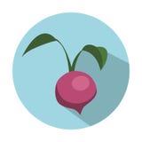Значок овоща бураков Стоковые Изображения