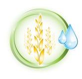 Значок пшеницы Стоковое фото RF