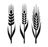 Значок пшеницы Стоковые Фото