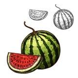 Значок раздела отрезка плодоовощ эскиза вектора арбуза бесплатная иллюстрация