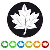 Значок сети лист - красочный комплект Стоковые Изображения