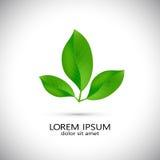 Значок с зелеными свежими листьями, шаблон дела дизайна Стоковые Фото