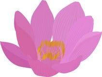 Значок цветка пинка лотоса вектора Иллюстрация штока