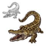 Значок эскиза аллигатора крокодила изолированный вектором иллюстрация штока