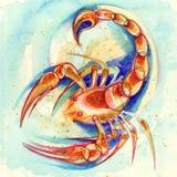 зодиак знака scorpio Стоковая Фотография