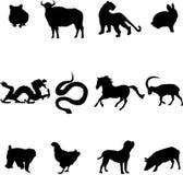 зодиак китайца животных иллюстрация штока