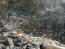 Зола от горящих полей риса Стоковые Изображения RF