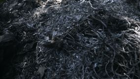 Зола травы и твердых частиц сток-видео