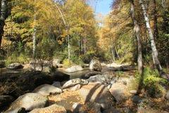 Золотая осень в регионе Altai в России Красивый ландшафт - дорога в лесе осени стоковое изображение