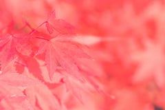 Золотая предпосылка нерезкости осени с кленовыми листами цвета сезоны Стилизованный как старый винтажный стиль Современная предпо Стоковая Фотография RF