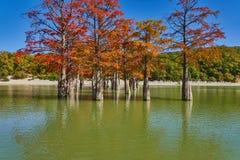 Золотая стойка distichum Taxodium величественно в шикарном озере против фона гор Кавказа осенью Осень стоковые фотографии rf
