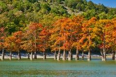 Золотая стойка distichum Taxodium величественно в шикарном озере против фона гор Кавказа осенью Осень стоковое фото
