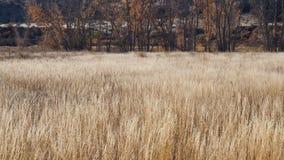 Золотая трава в ноябре стоковые фото