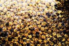 золотистая вода волшебные пузыри, предпосылка Стоковое Изображение