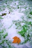 золотистая зима Стоковая Фотография RF