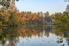 Золотистая осень Стоковые Фото