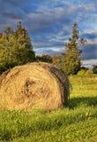 Золотистая связка сена стоковая фотография rf