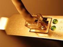 золотистая сеть Стоковые Фотографии RF