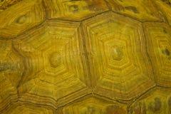 золотистая черепаха раковины Стоковая Фотография