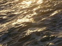 золотистое море Стоковые Изображения RF