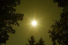 золотистое солнце Стоковые Изображения RF