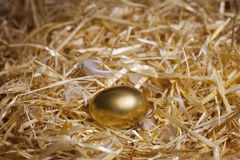 Золотистое яичко Стоковые Фотографии RF