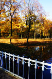 Золотистое autumn2 Стоковые Изображения RF