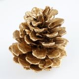 Золотистое pinecone украшение рождества золотистое белизна изолированная предпосылкой стоковые изображения rf