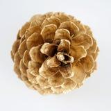 Золотистое pinecone украшение рождества золотистое белизна изолированная предпосылкой стоковое фото rf