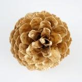 Золотистое pinecone украшение рождества золотистое белизна изолированная предпосылкой стоковые фото