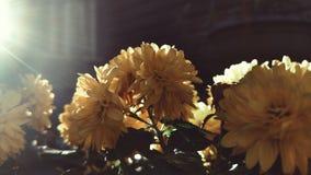 золотисто Стоковое Изображение RF