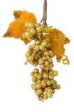 Золотистые виноградины Стоковые Фотографии RF