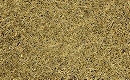 Золотистые иглы Стоковые Фотографии RF
