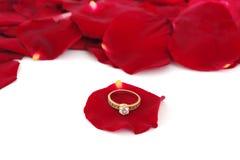 золотистые кольца лепестков подняли Стоковые Фото