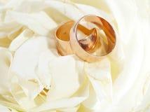 золотистые кольца Стоковое Изображение