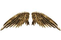 золотистые крыла стоковые изображения rf