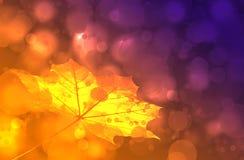 золотистые листья Стоковая Фотография RF