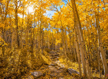 Золотистые листья Стоковая Фотография