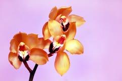 золотистые орхидеи стоковое фото