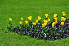 золотистые тюльпаны Стоковые Фотографии RF