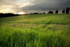 золотистый заход солнца лужка стоковые фото