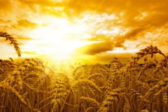золотистый заход солнца Стоковые Фото
