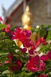 золотистый красный цвет Стоковые Фото