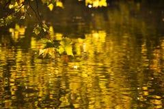 золотистый октябрь Стоковая Фотография