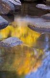 золотистый поток отражения стоковая фотография rf