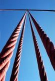 Золотистый строб Стоковое фото RF