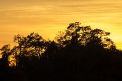 Золотое и тенистые деревья в вечере отображают для backgro Стоковое Изображение