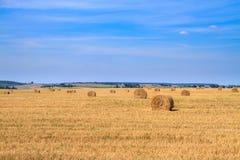 Золотое поле стерни соломы в осени Стоковое Изображение