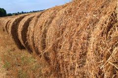 Золотое поле стерни соломы в осени Стоковое Изображение RF